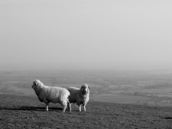 The South Downs Way