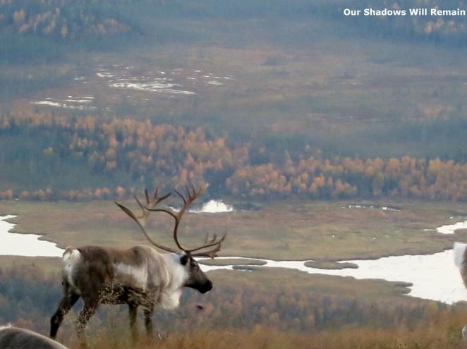 Life of a Reindeer