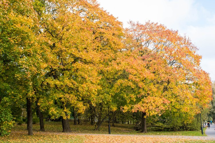 Autumn in Helsinki
